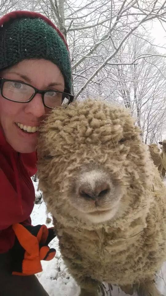 The Unbearable Cuteness of Mercer...dude, this sheep is ALWAYS blissed out.